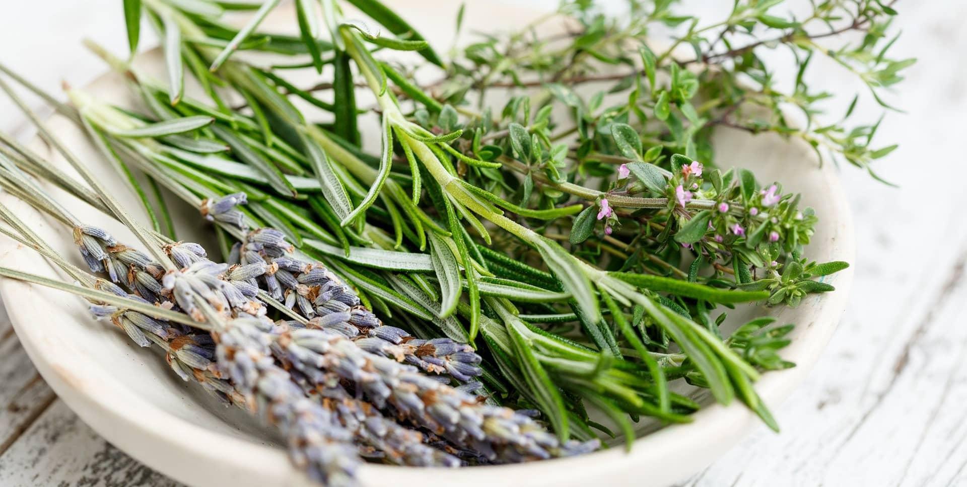Plante medicinale utilizate in Herbalsauna